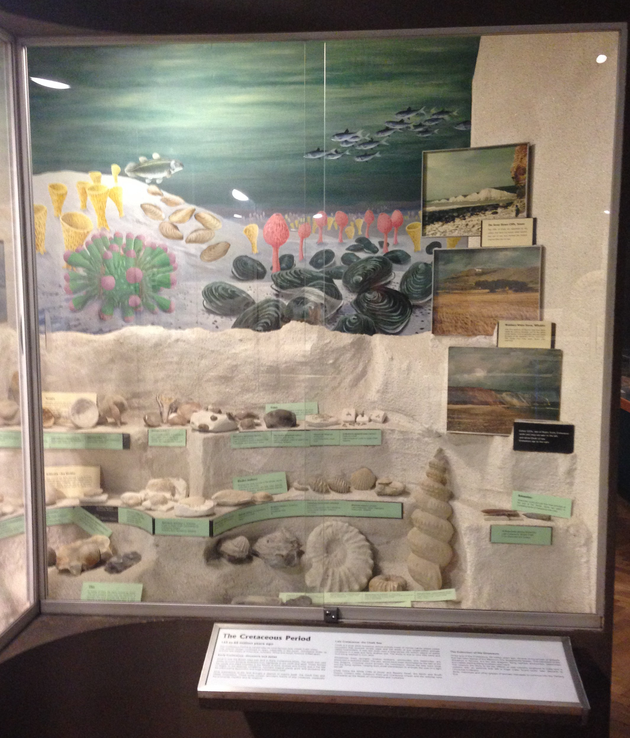 Display on the Cretaceous Period, complete with painted sea, chalk cliffs and photos of the White Cliffs and Seven Sisters for context.
