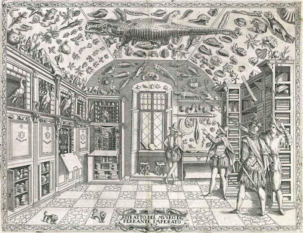 an engraving of a cabinet of curiosity